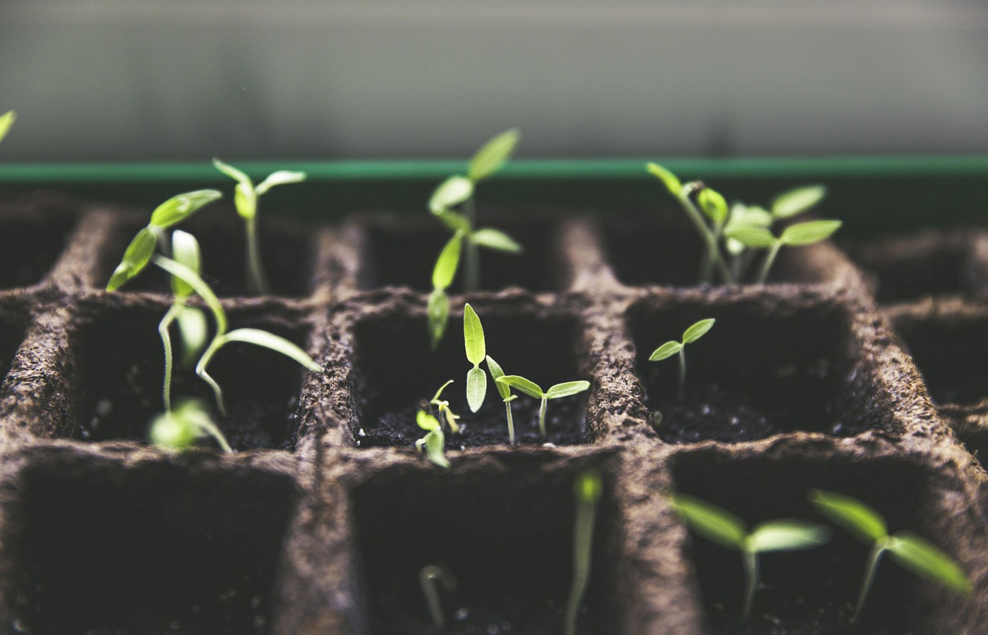 Seedlings in container
